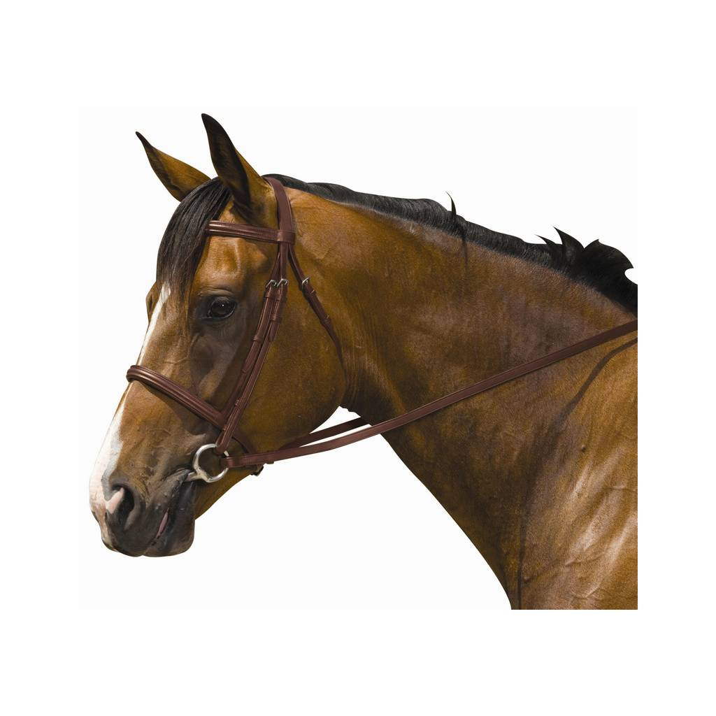 Kincade Padded Plain Raised Bridle