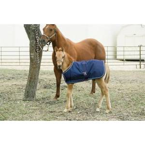 Kensington All Around Adjustable Foal Medium Weight Blanket