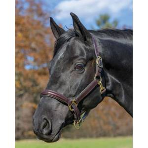 Shires Avignon Padded Leather Halter