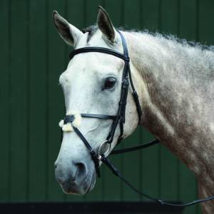Collegiate Essential Padded Raised Figure 8 Bridle