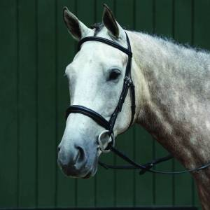 Collegiate Essential Padded Raised Cavesson Bridle