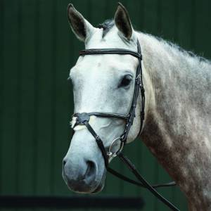 Collegiate Essential Padded Raised Fancy Stitched Figure 8 Bridle