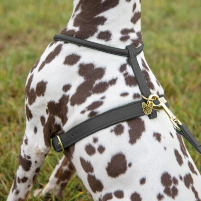 Shires Digby & Fox Rolled Leather Harness
