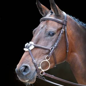 Shires Rossano Venice Bridle