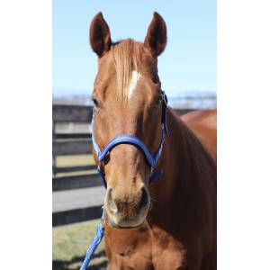 TuffRider Nylon Breakaway Halter & Lead Set