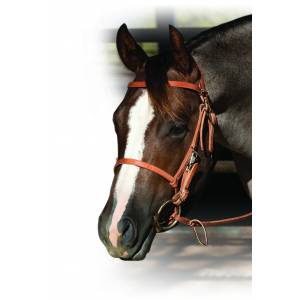 Schutz by Professionals Choice Trail Halter Bridle