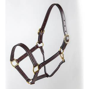 Tory Leather Traditional ProKentucky Halter