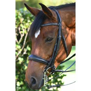 Ovation Europa Double Bridle