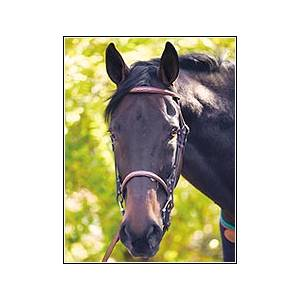Henri de Rivel Fancy Raised Snaffle Bridle