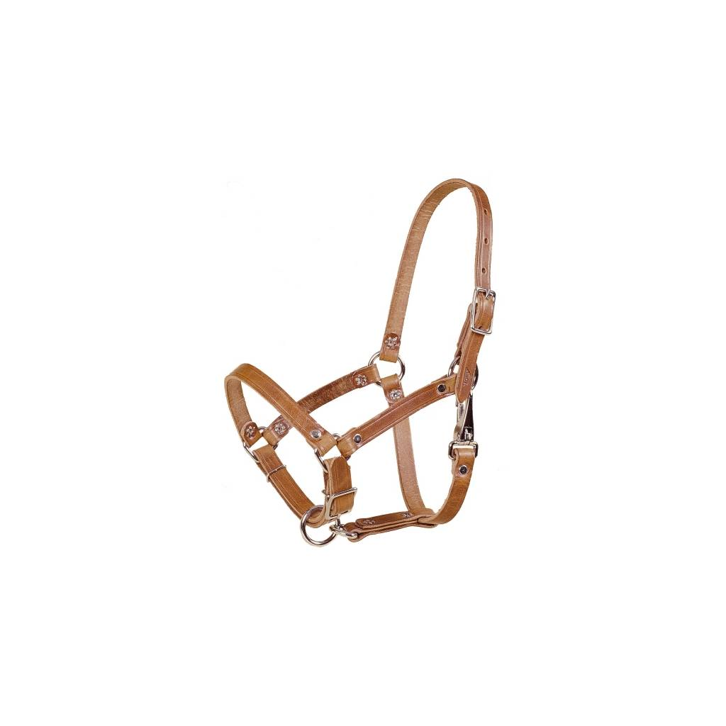 TORY LEATHER Leather Foal Riveted Halter