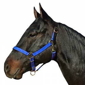 Leather Crown Nylon Breakaway Halter