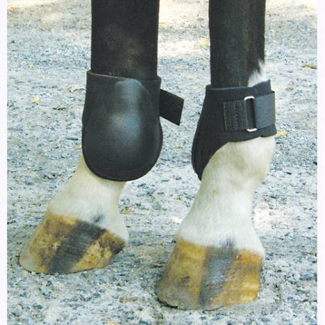 Neoprene Fetlock Boot