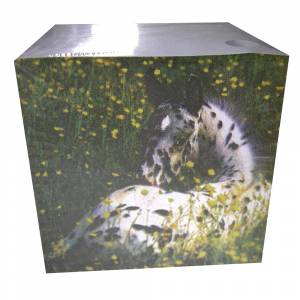 Appaloosa Foal Block Note Pad