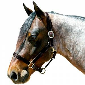 Latigo Lined Leather 1 Stable Halter