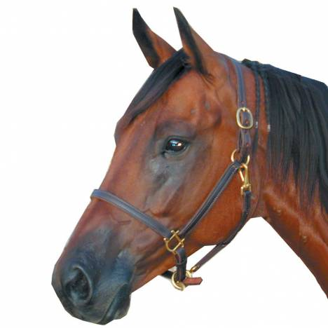 Deluxe Leather 3/4 Track Halter