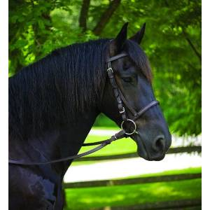 Perris Leather Draft Horse Bridle