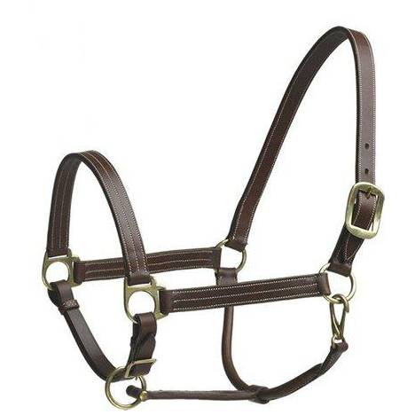Camelot Stable Halter Pony