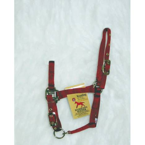 Hamilton Foal Halter with Adjustable Chin