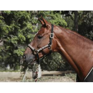 Kensington Padded Halter Set with  Lead