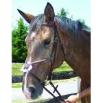 ProAm English Horse Bridles