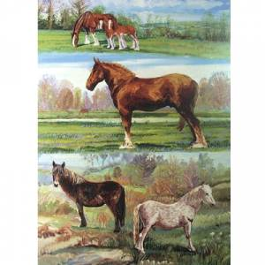Clydesdales and Ponies Blank Greeting Cards - 6 Pack
