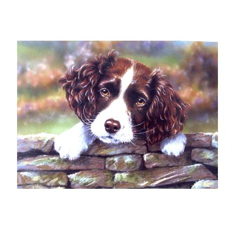 Please Don't Go (English Springer) Blank Greeting Cards - 6 Pack