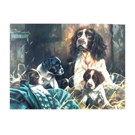 The Next Generation (English Springer) Blank Greeting Cards - 6 Pack