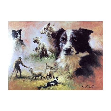 Border Collies Blank Greeting Cards - 6 Pack