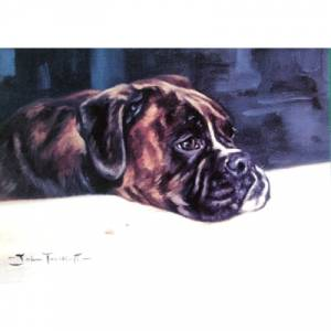 Crumbs (Boxer) Blank Greeting Cards - 6 Pack