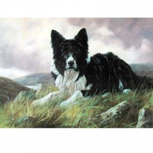 Collie on the Hillside (Border Collie) Blank Greeting Cards - 6 Pack