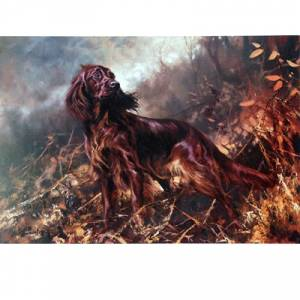 Irish Setter By: Mick Cawston