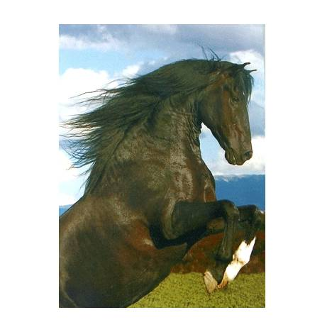 The Stallion Blank Greeting Cards - 6 Pack