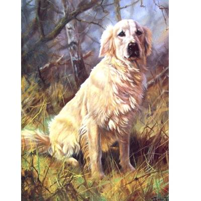 A Friend Golden Retriever Blank Greeting Cards 6 Pack