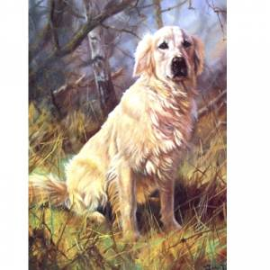 A Friend (Golden Retriever) Blank Greeting Cards - 6 Pack