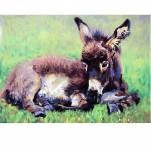 A Quiet Nap (Donkey) Blank Greeting Cards - 6 Pack