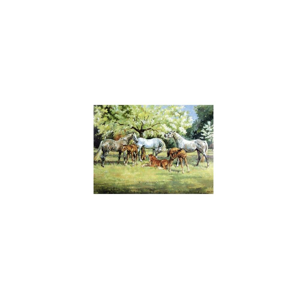Spring Time Blank Greeting Cards - 6 Pack