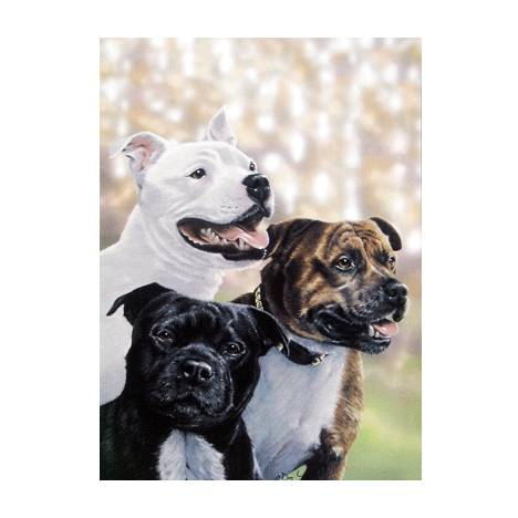 The Gang (Staffordshire Terriers) Blank Greeting Cards - 6 Pack