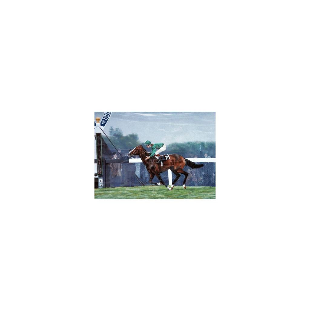 Shergar By: Brian Tovey, Matted
