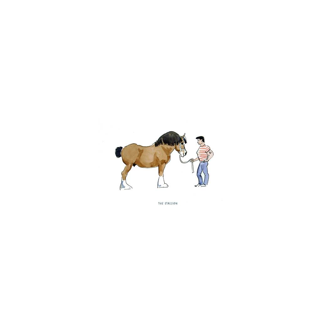 Horses - The Stallion Blank Greeting Cards - 6 Pack