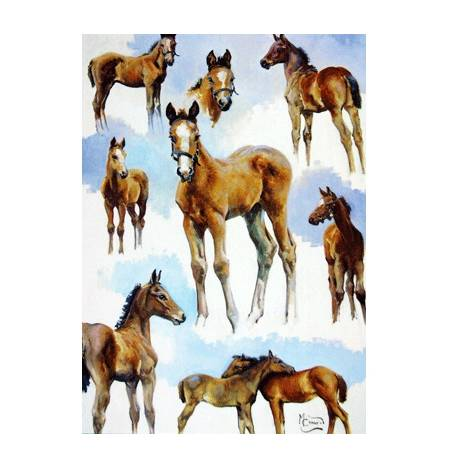 Foal Studies Blank Greeting Cards - 6 Pack