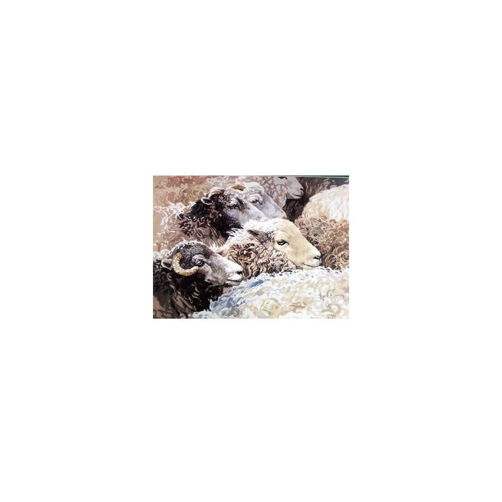Amongst the Flock (Sheep) Blank Greeting Cards - 6 Pack
