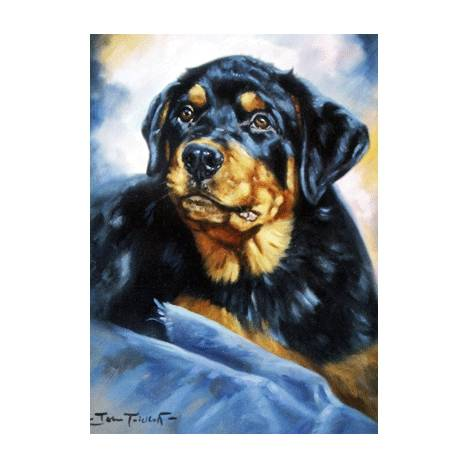 The Rottweiler Blank Greeting Cards - 6 Pack
