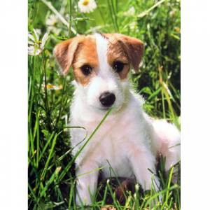 Dogs - Terrier Pup Blank Greeting Cards - 6 Pack