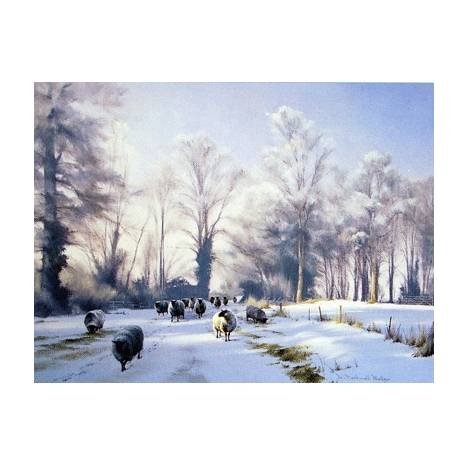 Thinking of Summer (Sheep) Blank Greeting Cards - 6 Pack