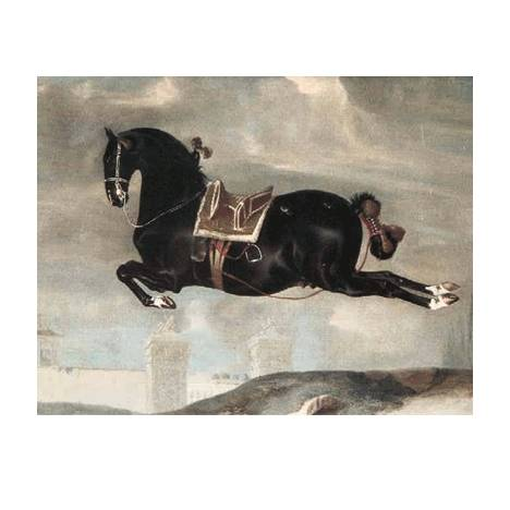 Black Horse in Capriole Blank Greeting Cards - 6 Pack