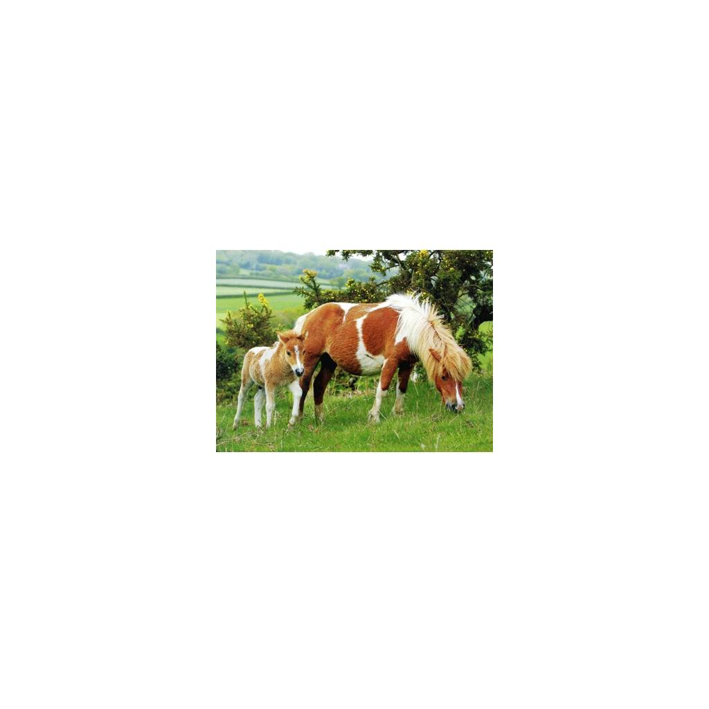 Summer Pasture Blank Greeting Cards - 6 Pack