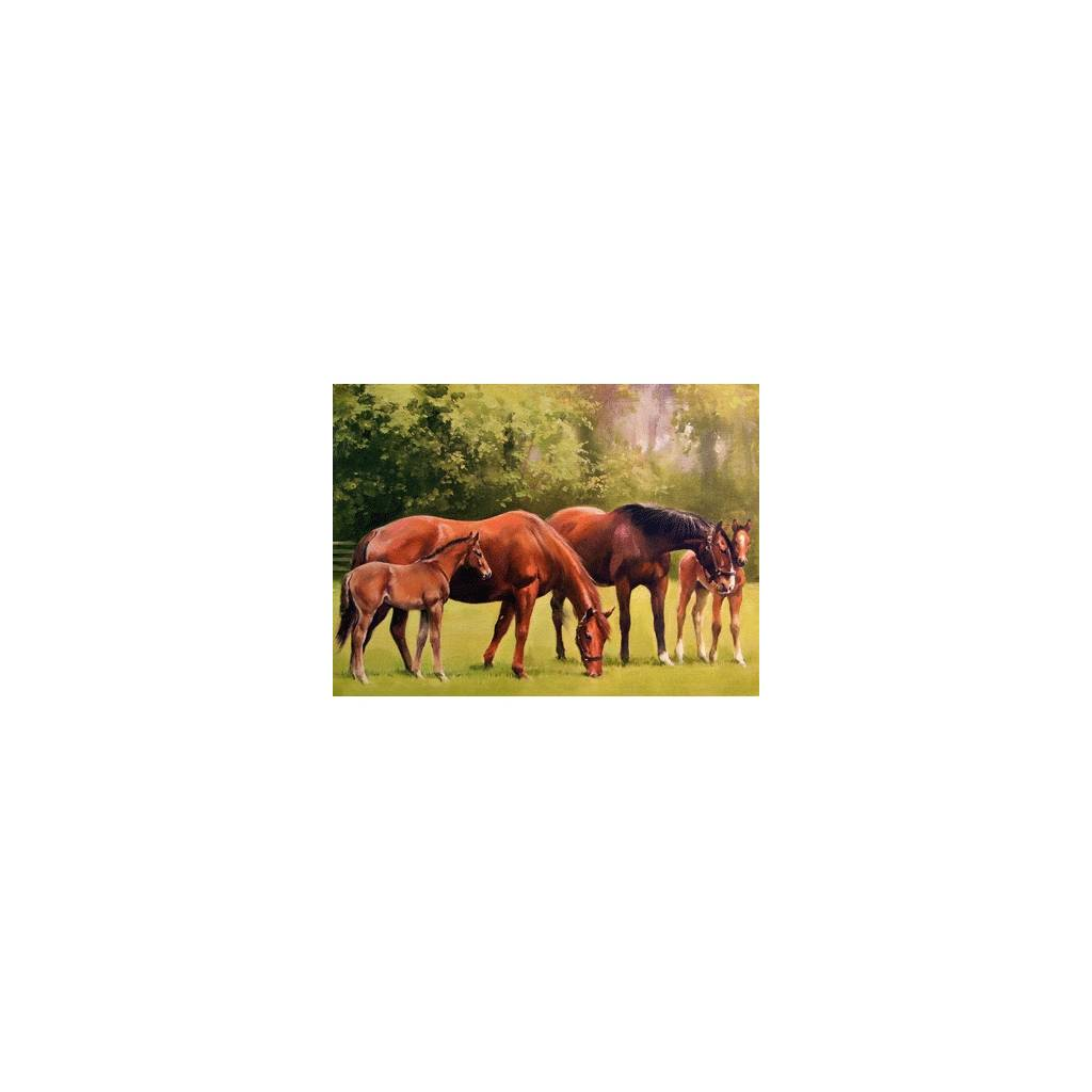Mares & Foals Blank Greeting Cards - 6 Pack