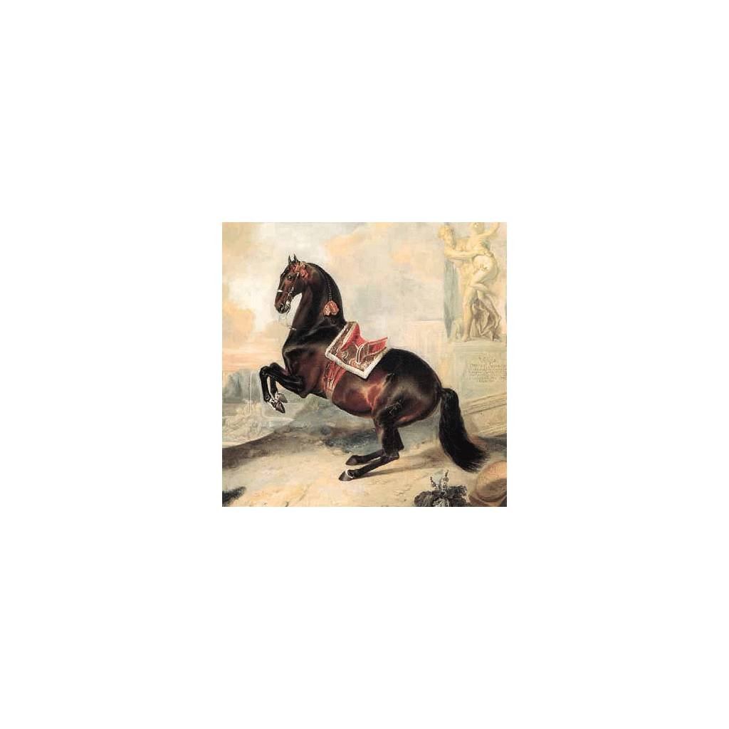 Bay Horse in Lavade Blank Greeting Cards - 6 Pack