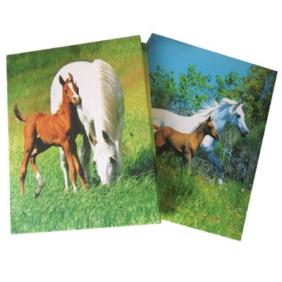 Puffy Cover Memo Book - 2 pack
