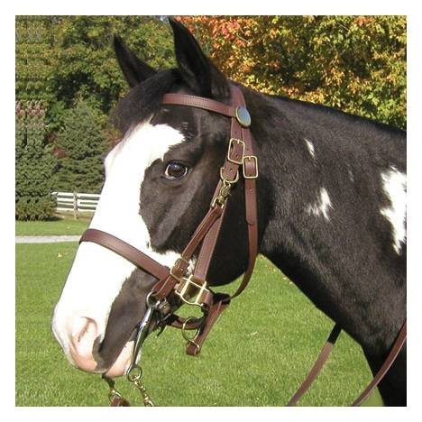 Beta All Weather Halter/Bridle Combo Trail Bridle